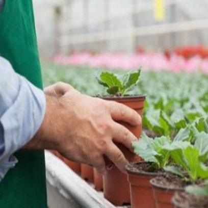 Cheap Bulk Pots For Nursery Manufacturer