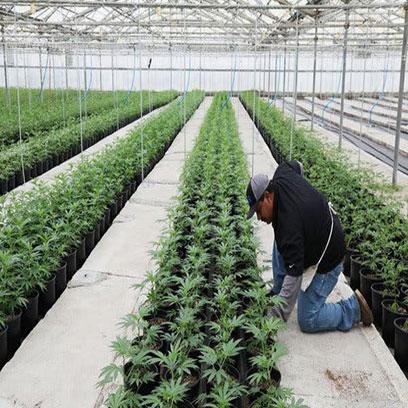 Bulk Buy 1 Gallon Plastic Plant Pots