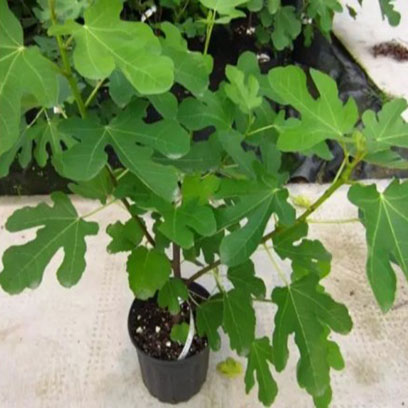 Cheap Plastic 1 Gallon Tree Pots Wholesale Price