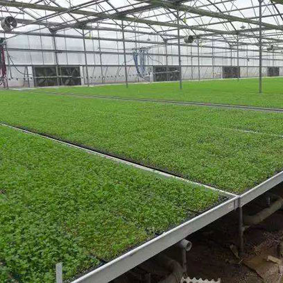 Shallow Germination Trays With Holes Supplier
