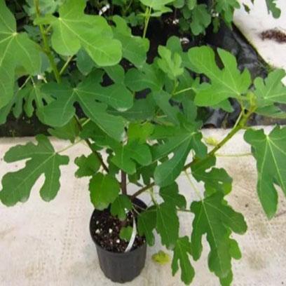 Cheap 1 Gallon Plastic Tree Pots Manufacturer