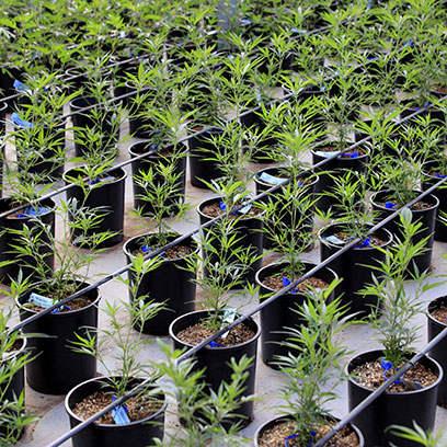 Cheap Black Plastic Garden Pots Manufacturer