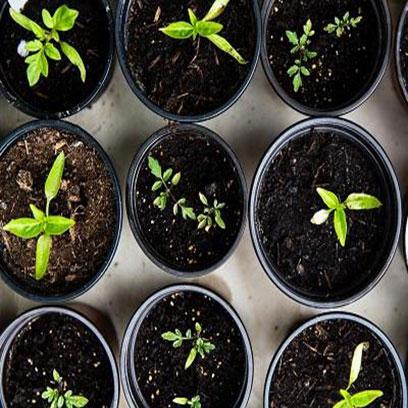 Bulk Buy Black Plastic Garden Pots Cheap
