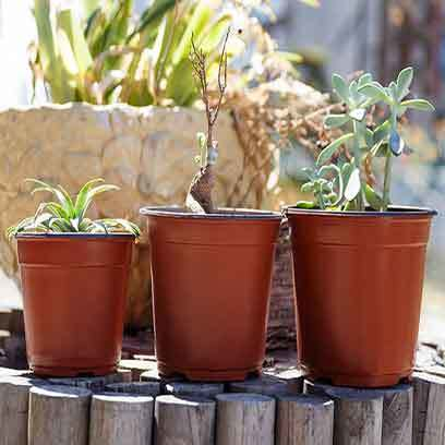 Cheap Mini Plastic Plant Pots Manufacturers Cape Town