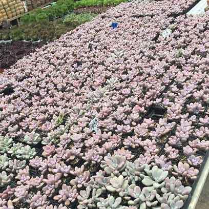 Small Black Plastic Succulent Pots Manufacturer