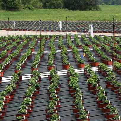 Plastic V9 Nursery Pots Supplier Saudi Arabia