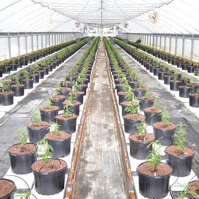 Cheap Big Garden Plant Pots Wholesale Supplier