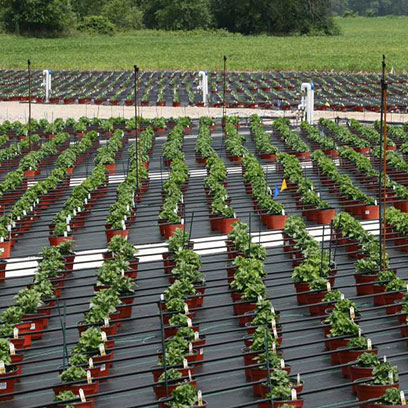Cheap Viagrow Plastic Nursery Pots Manufacturers