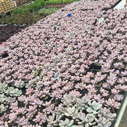 Cheap 9 Cm Square Plastic Plant Pots Suppliers