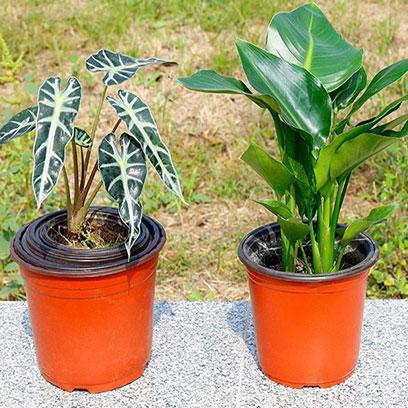 Cheap Plastic Garden Pots Wholesale Price Chile