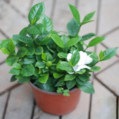 Plastic Potting Pots Wholesale Suppliers In China