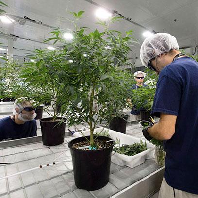 Plastic 3 Gallon Tree Pots Manufacturers Canada