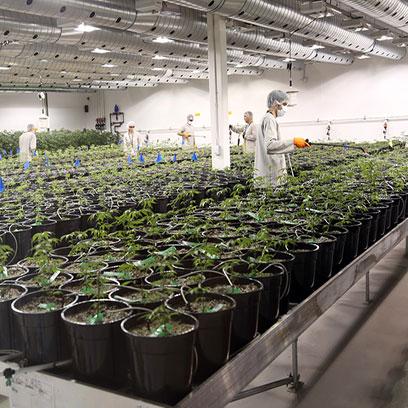 Cheap 3 Gallon Plastic Tree Pots Suppliers USA