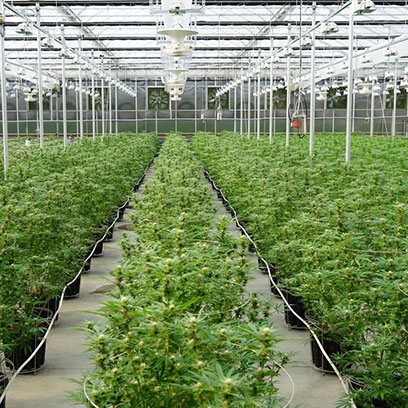 Cheap 20 Gallon Plastic Tree Pot Manufacturers USA