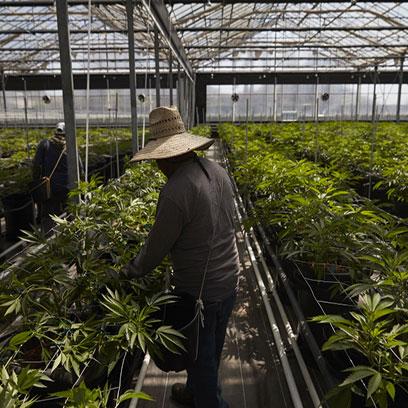 Cheap Plastic Five Gallon Planter Suppliers Canada