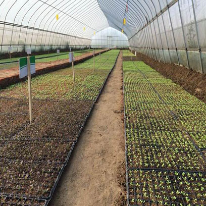 Plastic 10x20 Plant Trays Wholesale Price NZ