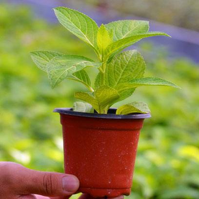 Cheap Mini Plastic Plant Pots Wholesale Price USA