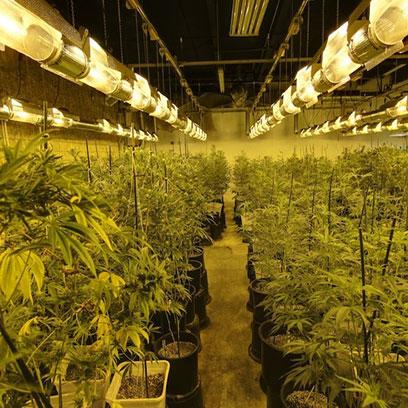 Plastic 2 Gallon Pots For Plants Wholesale Australia