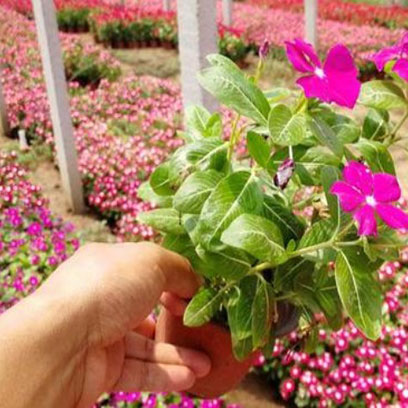 Cheap Plastic V9 Nursery Pots Suppliers USA