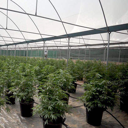 Greenhouse Plastic Nursery Pots Wholesale Canada