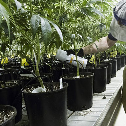 Cheap Plastic 7 Gallon Nursery Pots Suppliers USA