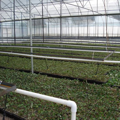 Plastic Greenhouse Trays Wholesale Price Chile