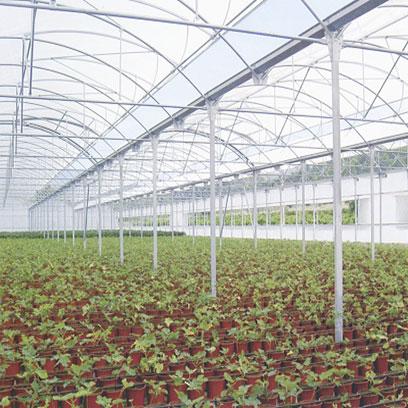 Plastic V11 Nursery Pots Wholesale Suppliers USA