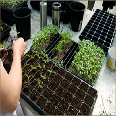 Plastic Rootmaker Trays Wholesale Suppliers USA