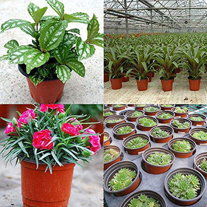 Bulk Buy Plastic Plant Pots Cheap Philippines
