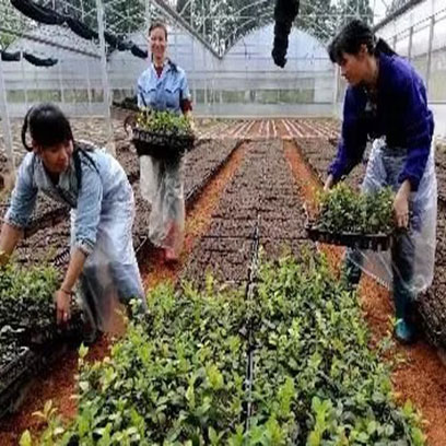 Greenhouse Trays And Pots Suppliers Philippines