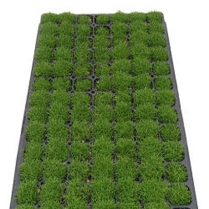 Cheap Plug Plant Trays Manufacturers France