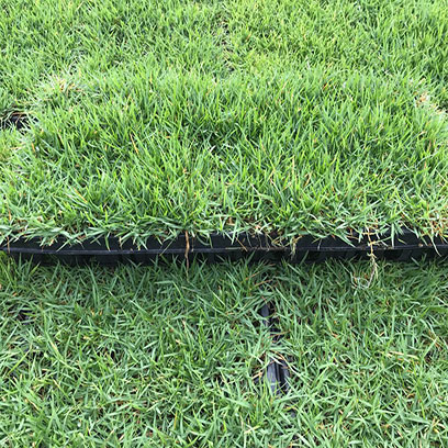 Best Rice Seedling Tray Wholesale Suppliers Indonesia