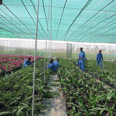 Large Black Plastic Pots For Plants Manufacturers USA