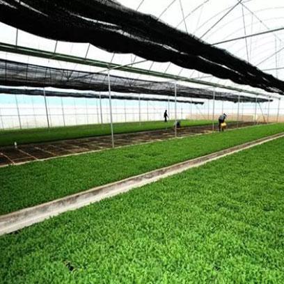 Hot Sale Rice Seedling Trays Wholesale Suppliers Myanmar