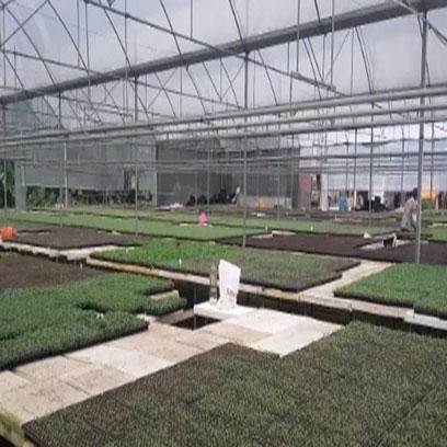 Plastic Seedling Plug Trays Wholesale Suppliers Vietnam
