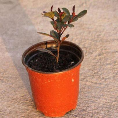 Best Double Color Plastic Flower Pots Producer Brazil