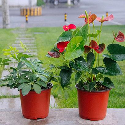 Cheap Plastic Flower Pots Wholesale Suppliers Mexico