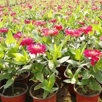 Cheap Large Plastic Flower Pots Manufacturers Colombia