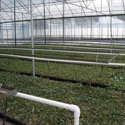 Cheap Plastic Growing Trays Wholesale Price Honduras