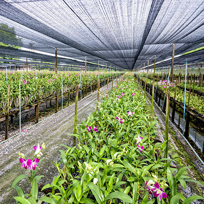 Cheap Plastic Seed Starter Tray Wholesale Ecuador