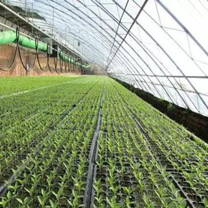 Cheap Plastic Plant Trays Suppliers South korea