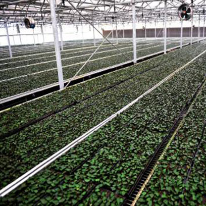 Cheap Plastic Seedling Plug Trays Manufacturers USA