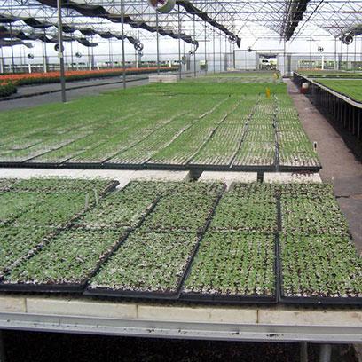 High Quality Plastic Plant Trays Manufacturers UAE