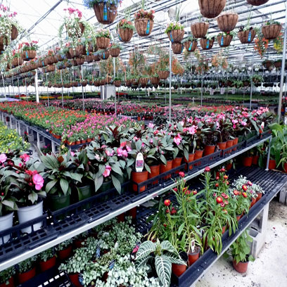 Large Plastic Flower Pots Wholesale Price Israel