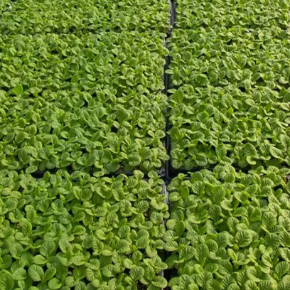 Cheapest Plastic Growing Trays Suppliers Colombia
