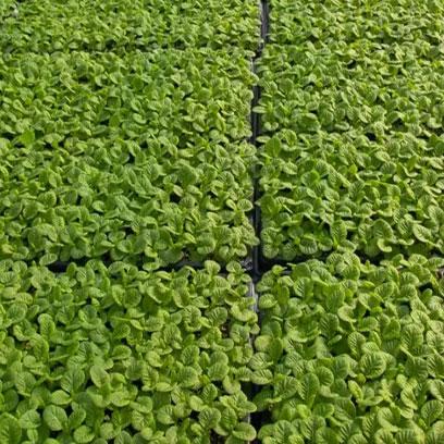 Bulk Buy Cheap Plastic Seedling Plug Trays Australia