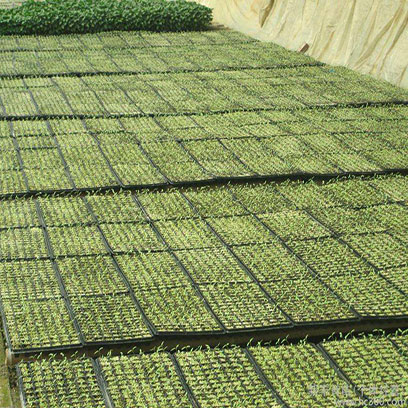 Cheap Plastic Seed Starter Trays Made In China
