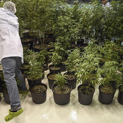 Plastic 4 Gallon Plant Pots Wholesale Suppliers Canada