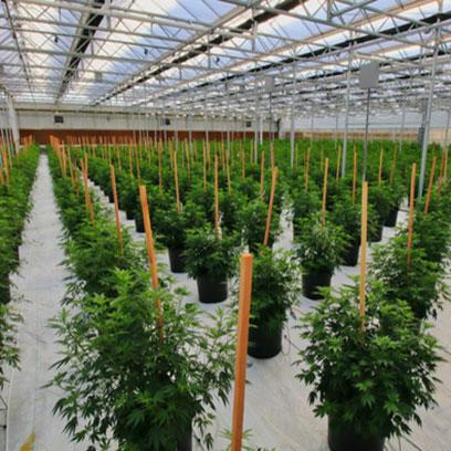 Cheap 2 Gallon Plant Pots Manufacturers United States
