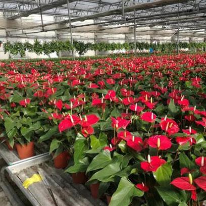 Cheap Plastic Plant Pots Wholesale California